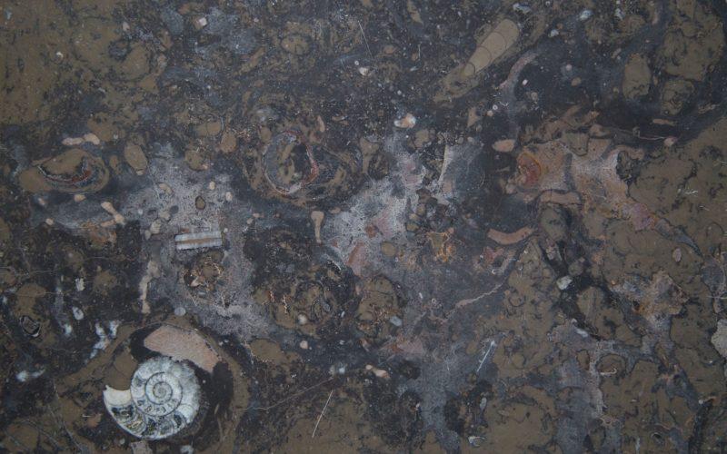 Marrón Fósil